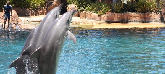 Cayo Santa Maria Dolphin Show